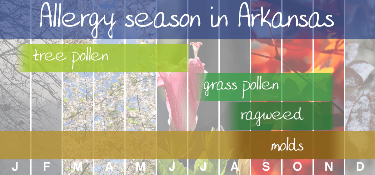 Allergy seasons in Aransas graphic showing allergens all year long: tree pollen, grass pollen, ragweed, molds
